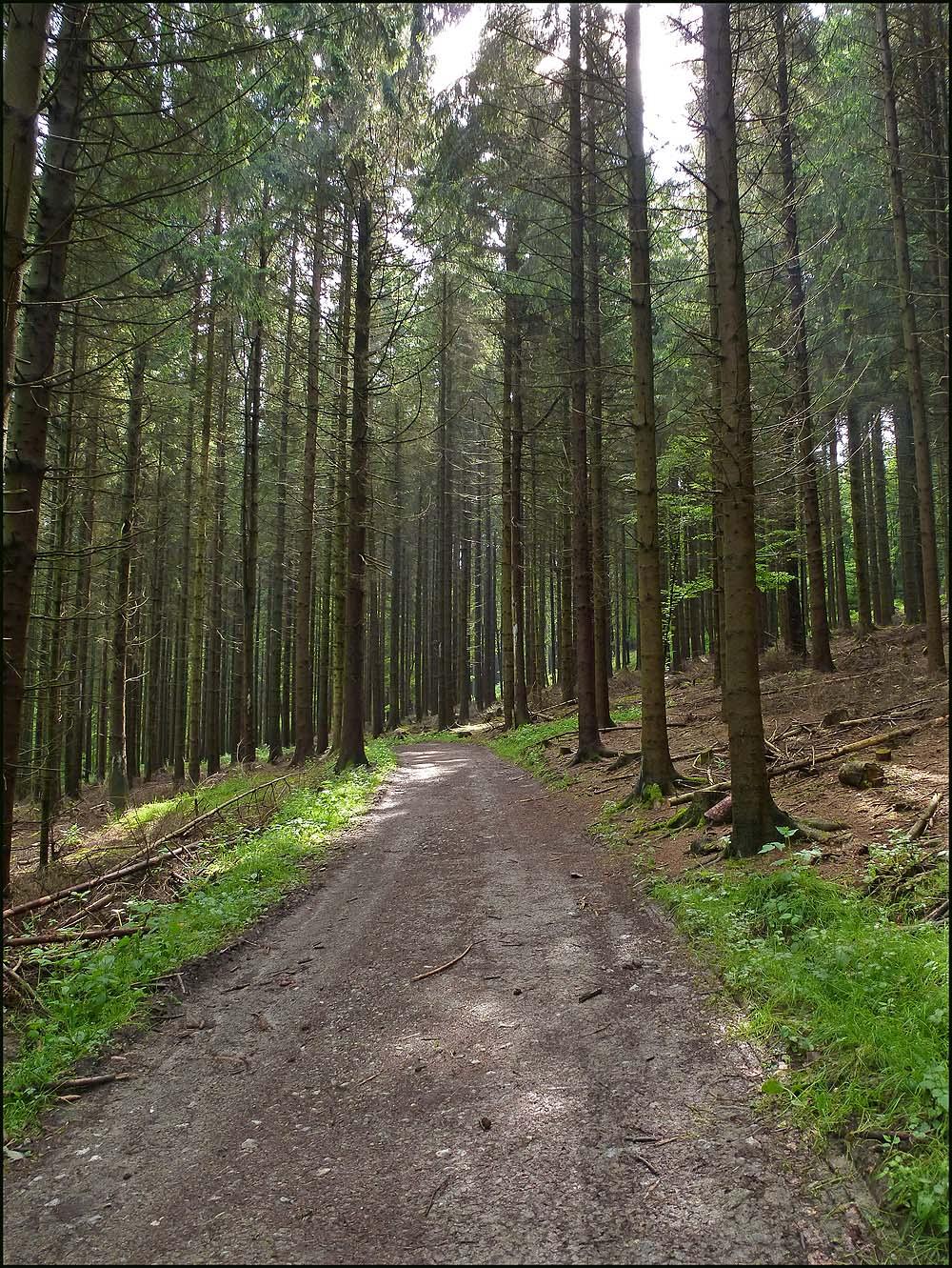 Etwas breiterer Waldweg