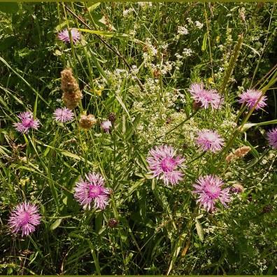 Bunter Strauß Wiesenblumen