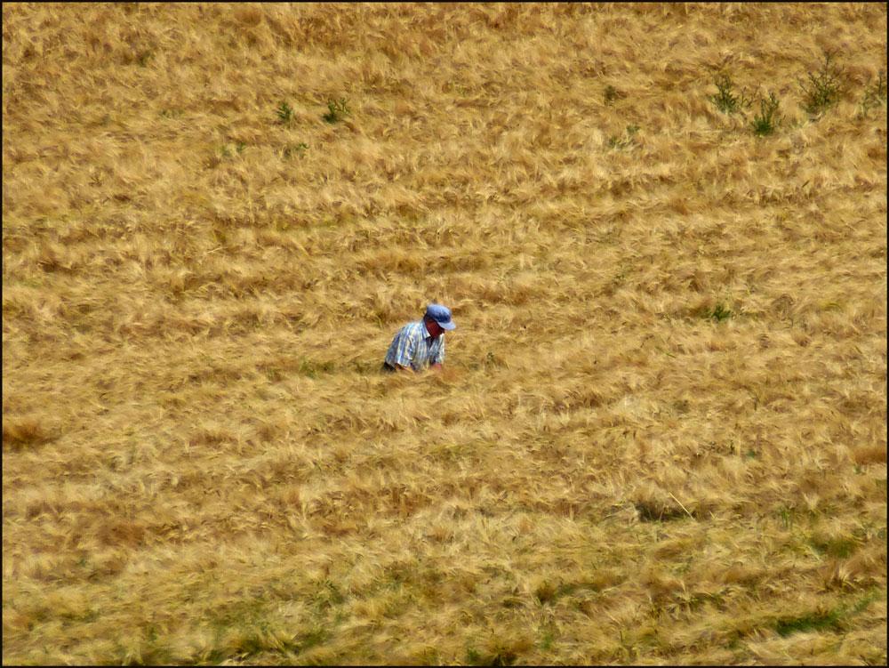Rätseln, wer da WAS in den Feldern treibt