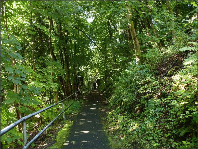 Natursteig_Sieg_E3 (18)
