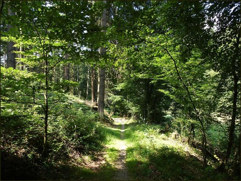 Durch herrliche Waldpassagen