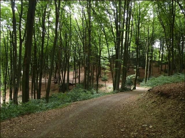 Eselsweg (9)