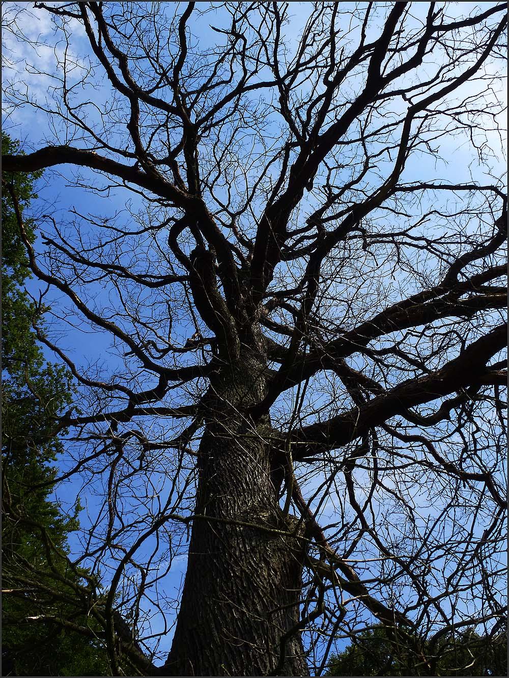 Senkrecht hinauf geguckt in den kahlen Baum - Felderbachtal in der Elfringhauser Schweiz