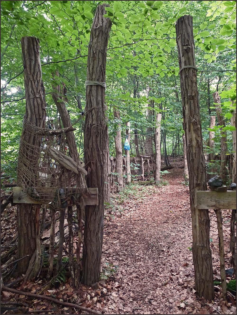 Waldschluchtenpfad (20)