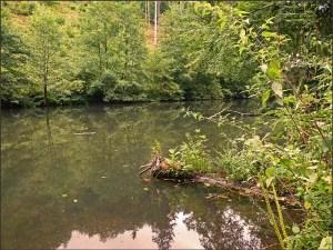 Waldschluchtenpfad (79)