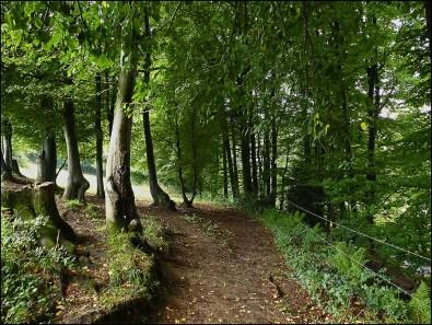 Steinbücheler Mühlenweg
