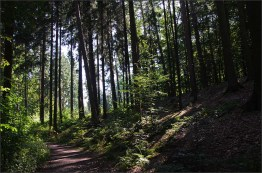 Tuchmacherweg_RAW (283)