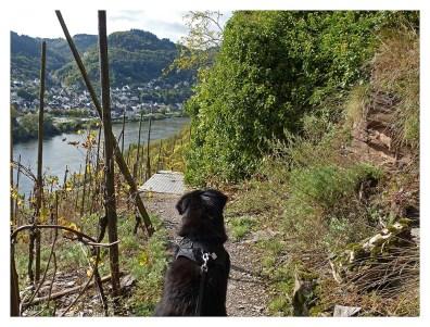 Spike wartet auf das Abenteuer Weinberg