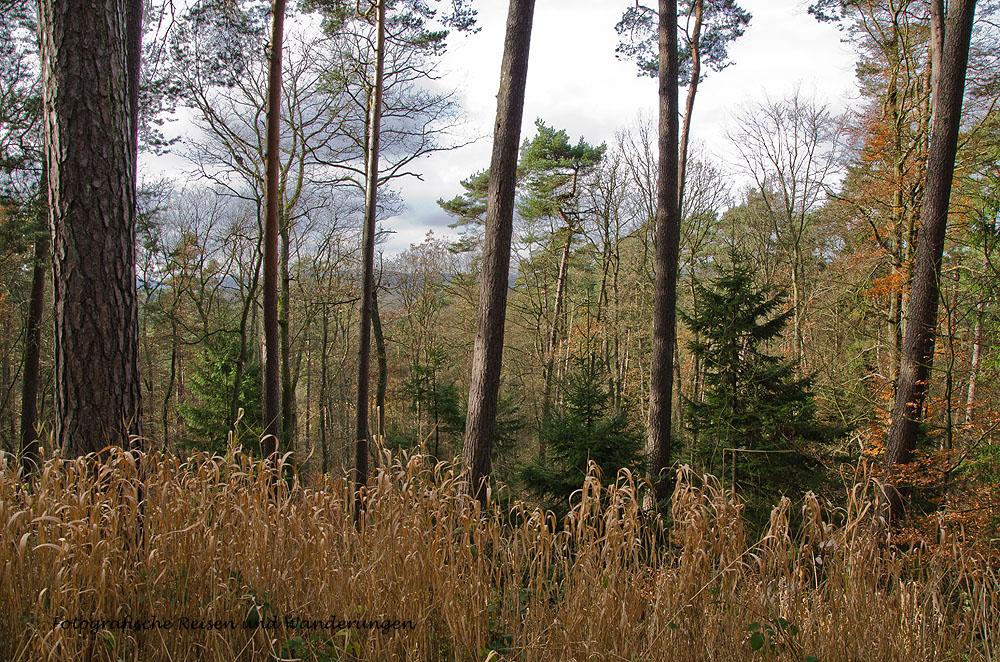 Gerolsteiner Dolomiten - Der Herbst