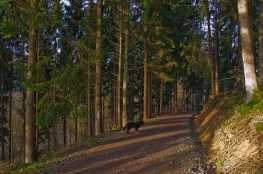 Freudenbergwanderung (10)