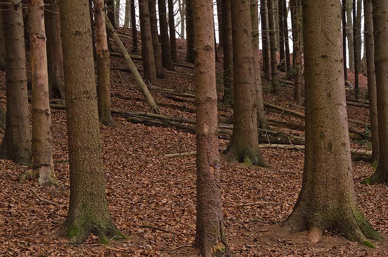 Grafen_und Moenchsweg (57)