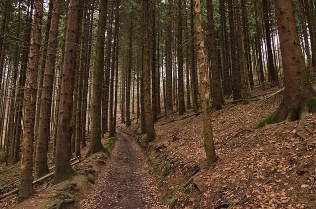 Grafen_und Moenchsweg (60)