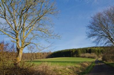 KlosterSteinfeldetc (10)