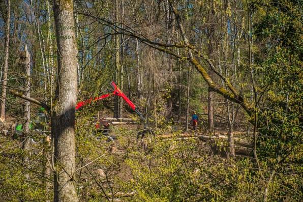 Zu weit gelaufen - Waldarbeiten