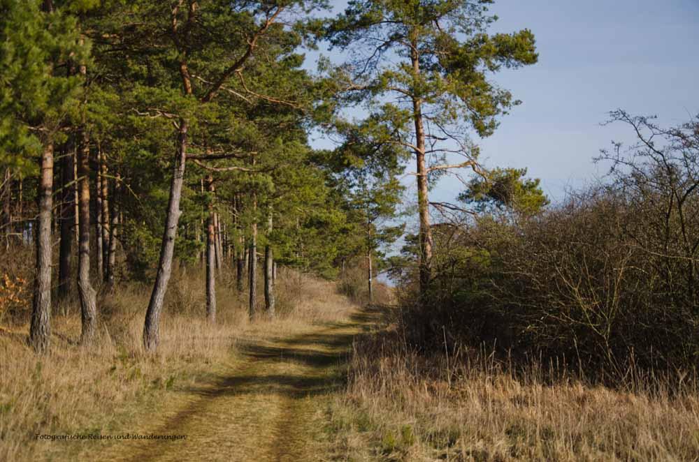 So schöne Wiesenwege am Waldrand