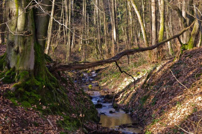 Moenchweg (95)