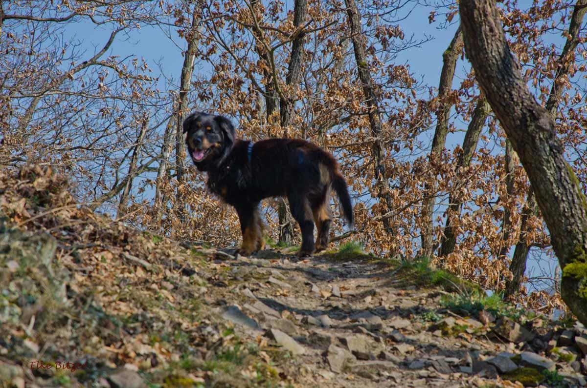 Leichte Klettersteige in Deutschland - Spike mit mir auf Tour
