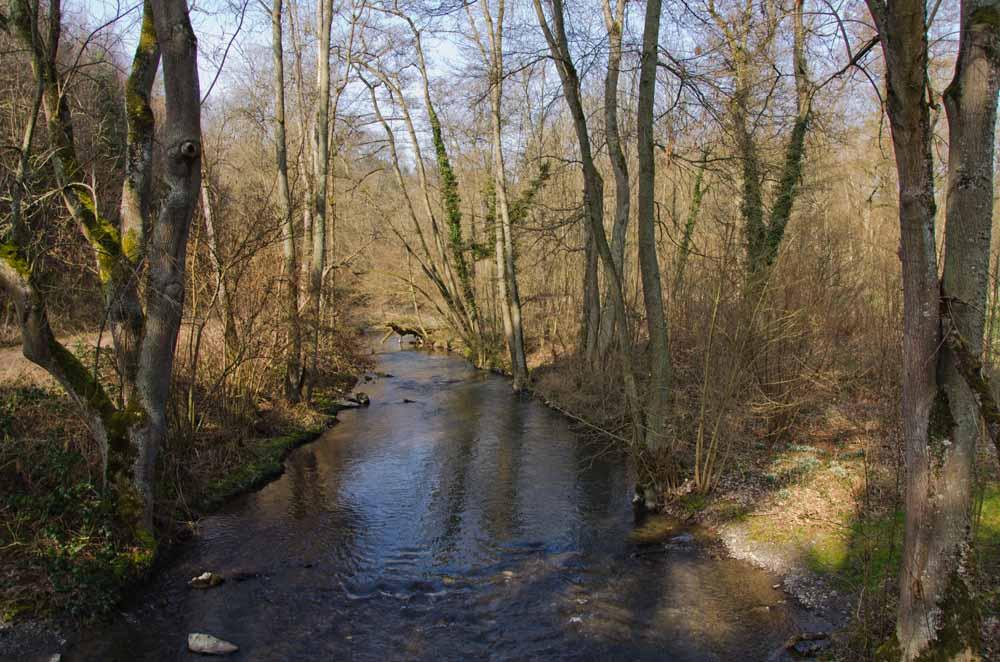Moselsteig_TreisKArden_Moselkern (43)