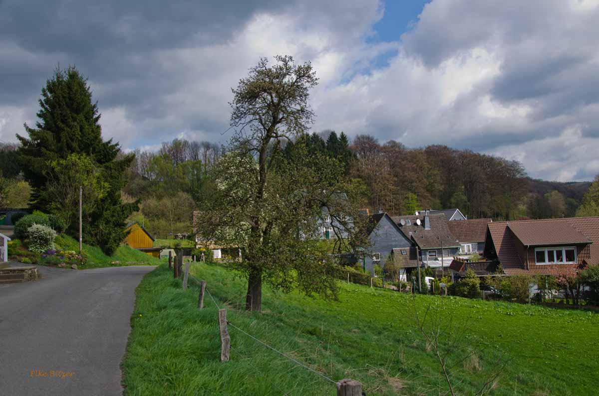 Mühlen und Bäche im Eifgenbachtal (115)