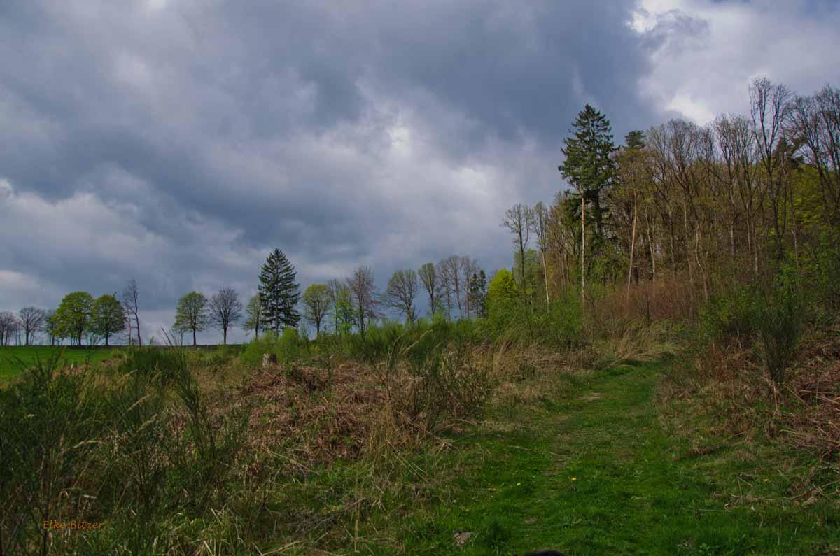 Mühlen und Bäche im Eifgenbachtal (132)