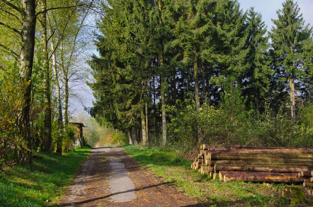 Mühlen und Bäche im Eifgenbachtal (47)