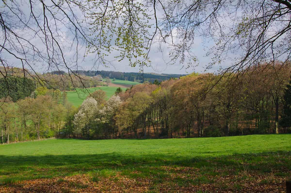 Mühlen und Bäche im Eifgenbachtal (81)