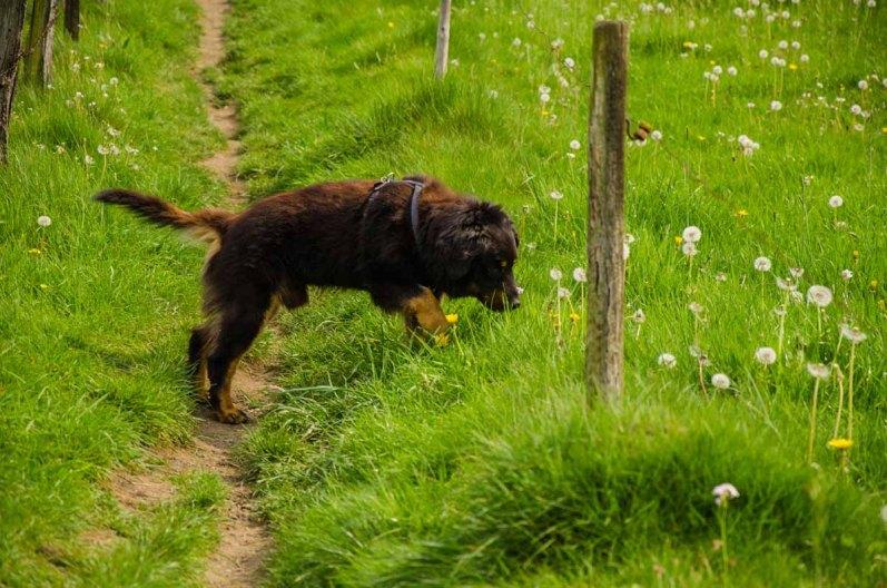 Spike bleibt immer cool am Rande der Weiden