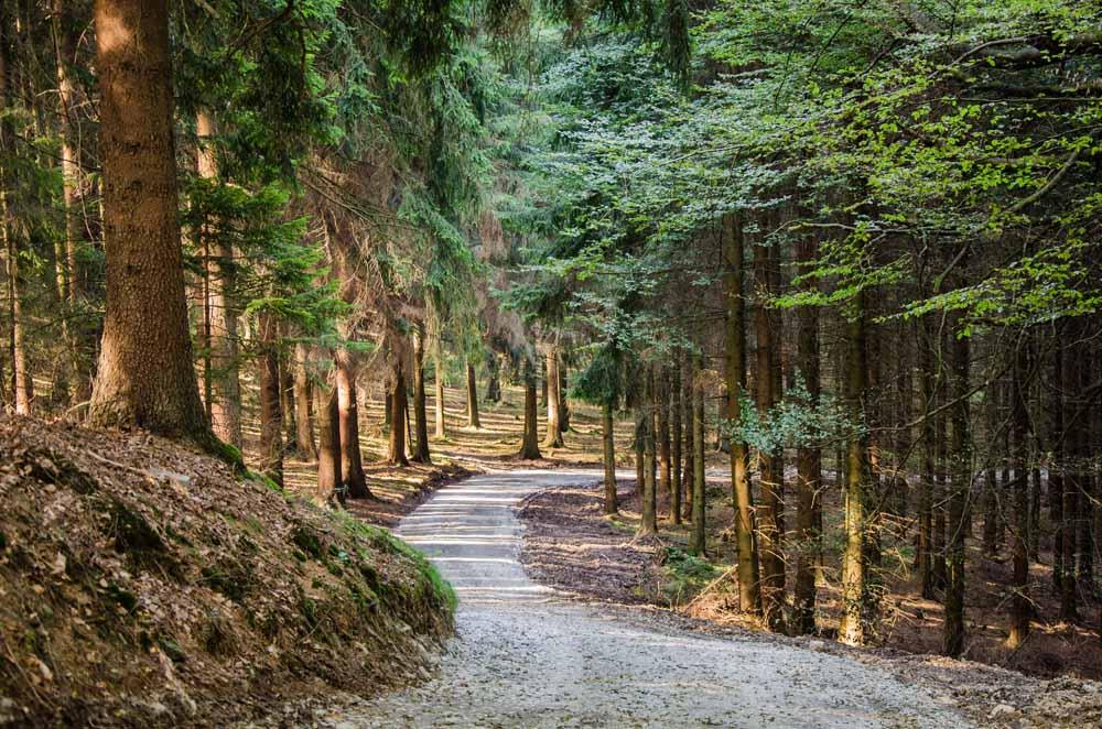 Hübsch geschwungene Waldwege
