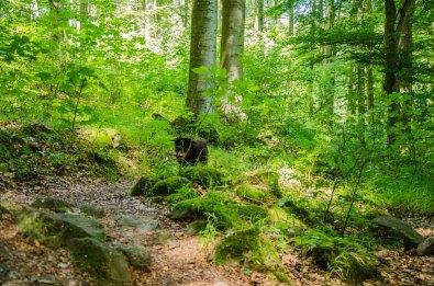 Wandern_in_und_um_die_Holzbachschlucht_0245