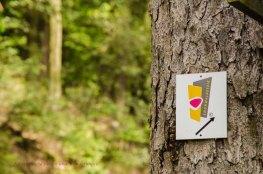 Und immer wieder der Soonwaldsteig