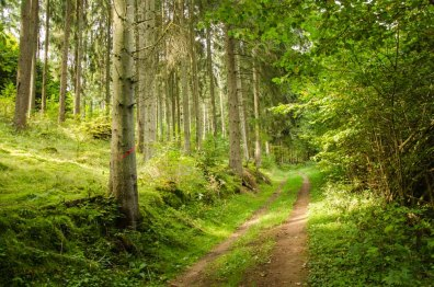 Nohener Nahe Schleife Waldweg