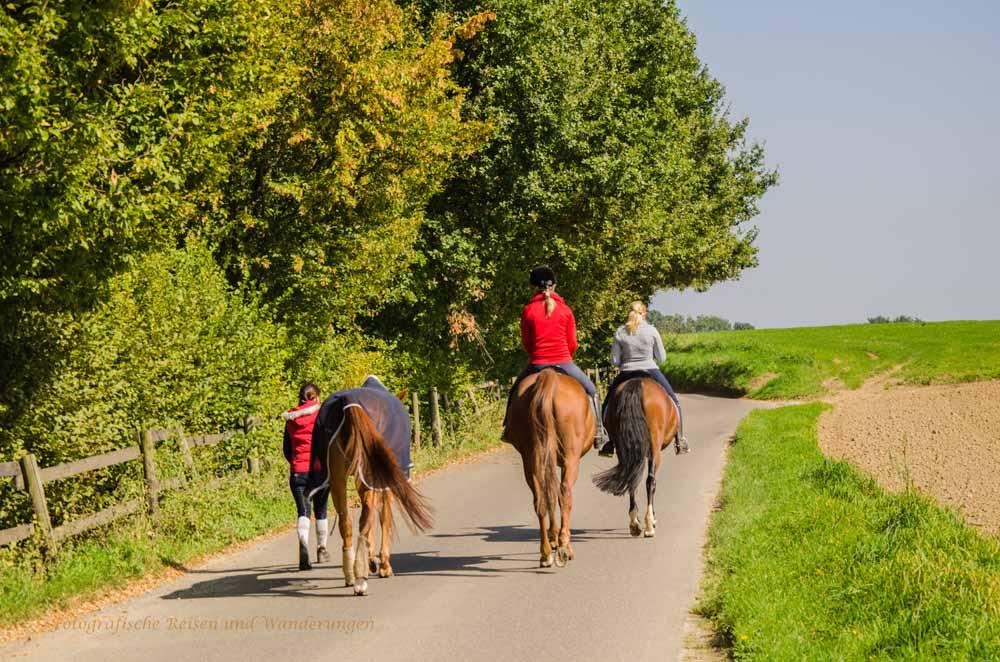 Dörperweg und überall gibt es Pferdehöfe