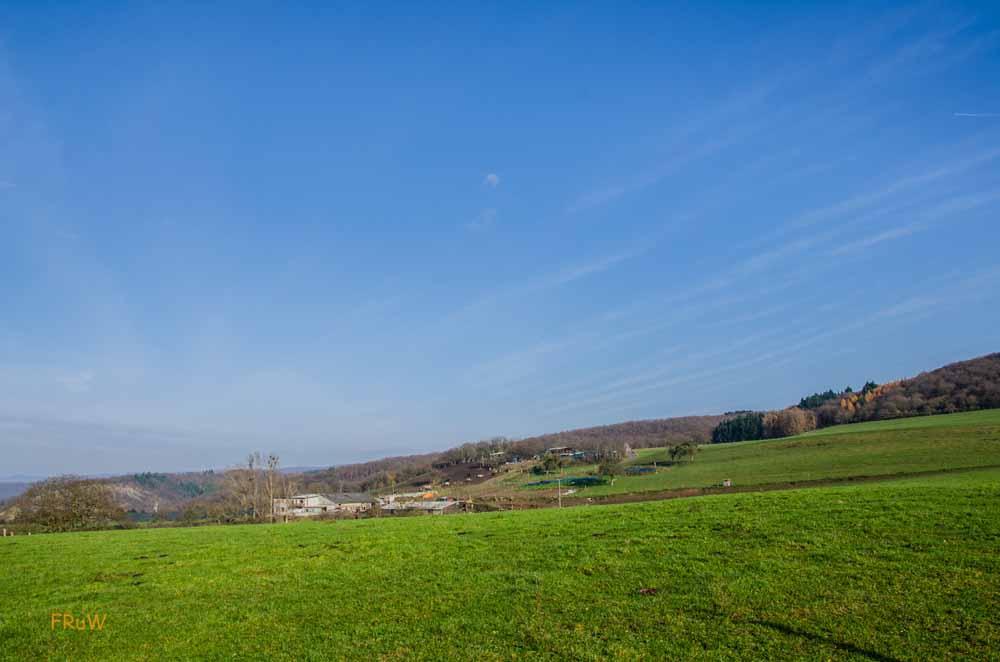 Hammerstein - Burgruine Hammerstein und die Wildschweine auf dem Rheinhöhenweg