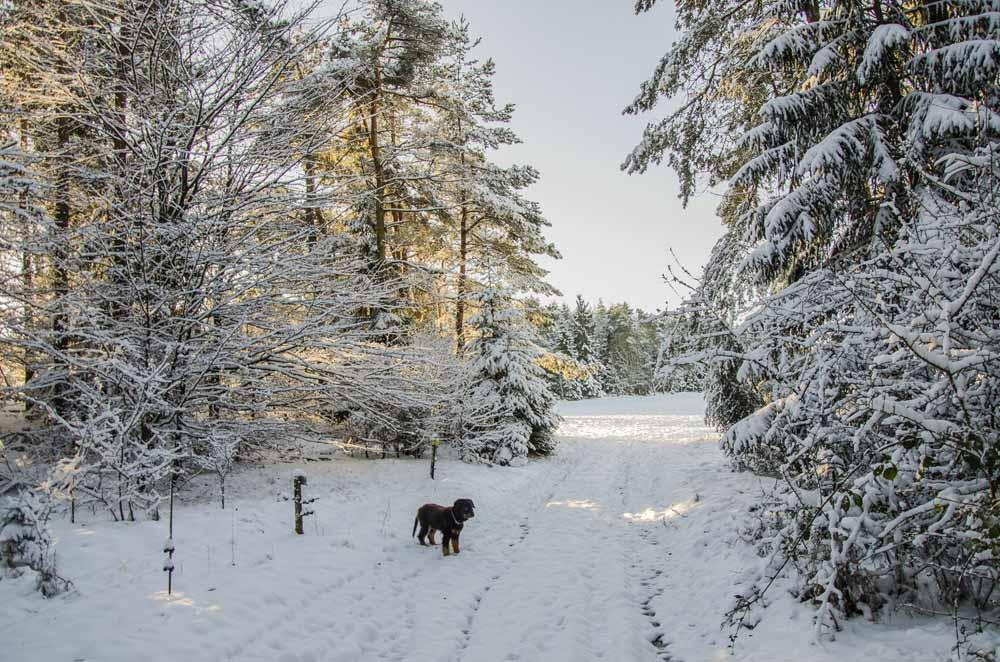 Schneelandschaft in Mirbach