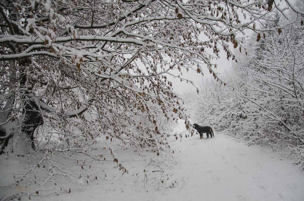 Schneelandschaft am Kurtekotten