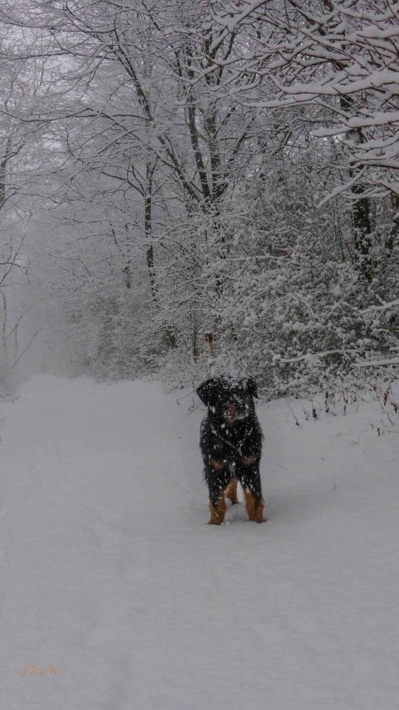 2015 01 24_Homezone im Schnee_0038