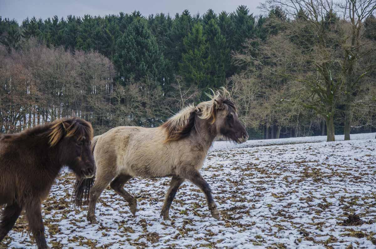 Siebengebirge Komper Heide_0066