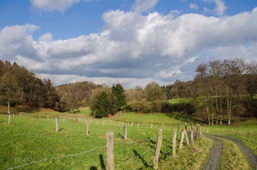 Siebengebirge Komper Heide_0176