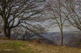2015 03 07_St_Goar_Oberwesel_0595Amrum