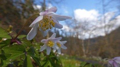 Blumenbilder Moselsteig_0018