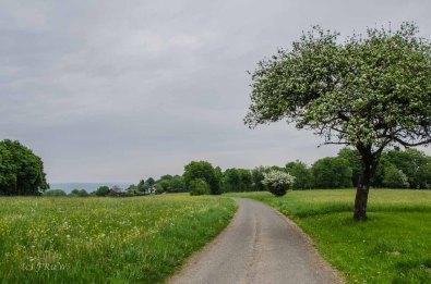 Greifensteinwanderung_0160