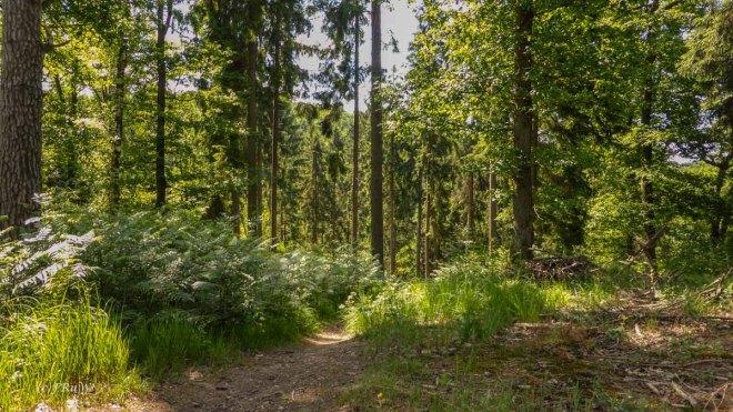 Eifgenbachrunde moderat_0391
