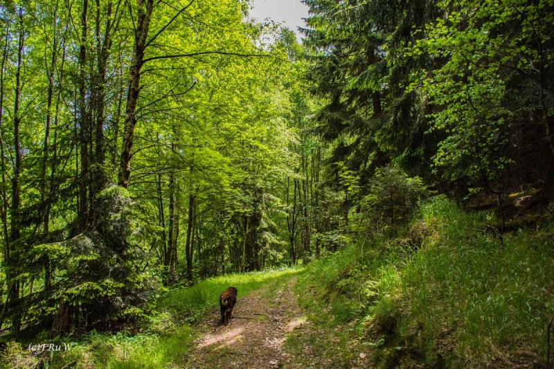 Urlaub Harz 2015_0128