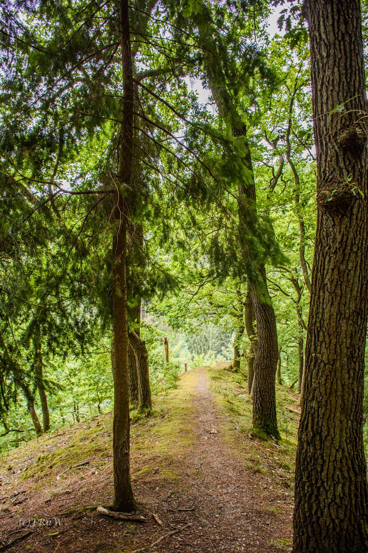 Welch ein schöner Waldweg