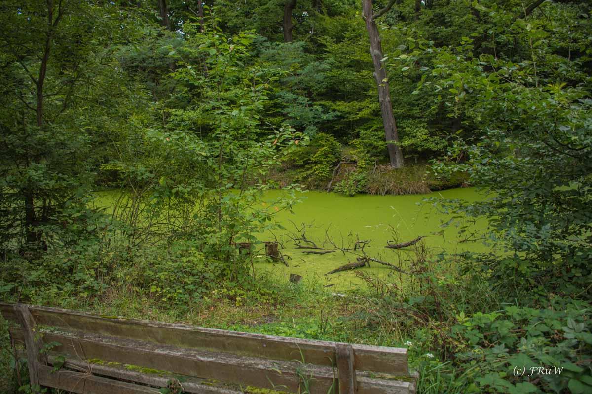 Der grüne Tümpel beherbergt sicher viele Tierchen