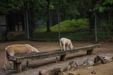 TierparkReuschenberg_0140
