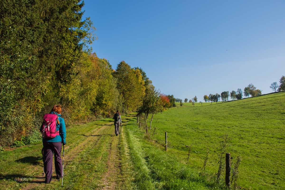 Wiesenweg im hellen Sonnenschein - Herbststimmung - Wandern auf dem Landlebenweg