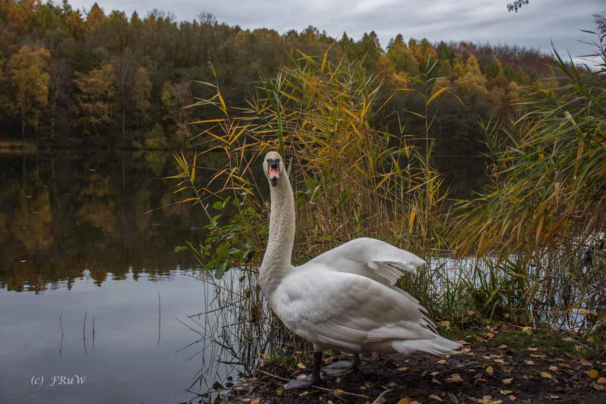 Brühler Seen (82)