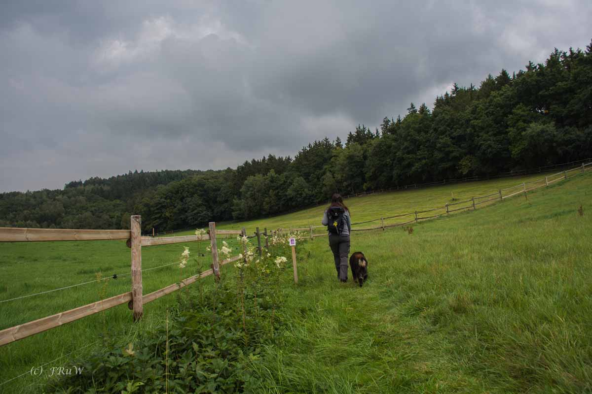 Traumschleife Oberes Baybachtal Teil 2