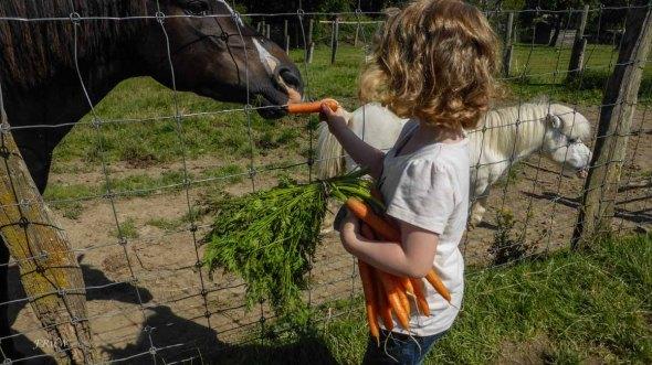 Das Grünzeug mögen sie eigentlich lieber- Die Ziegen auf dem Berger Hof